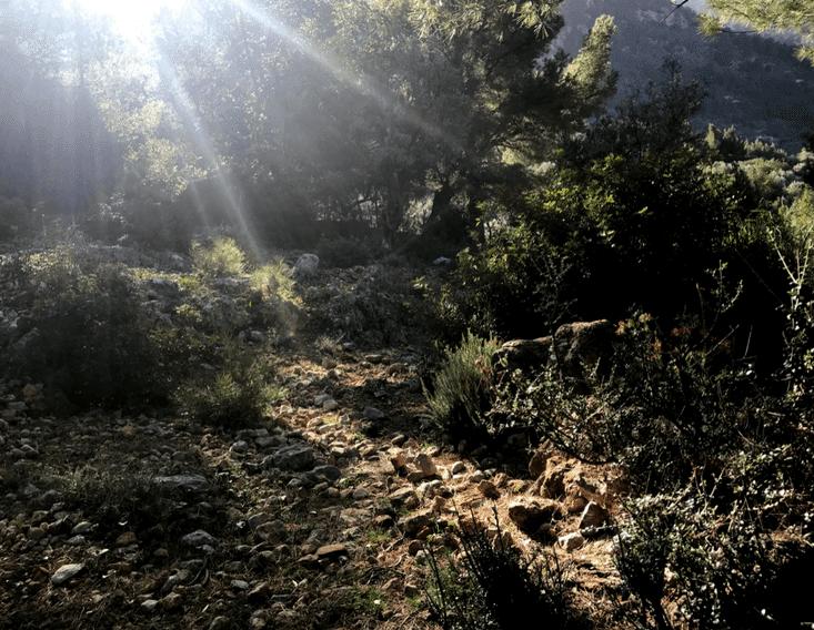 Terapias Forestales en Can Ribera Mallorca