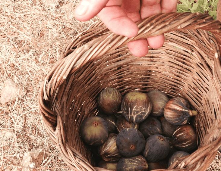 huerto ecológico en Mallorca, Can Ribera